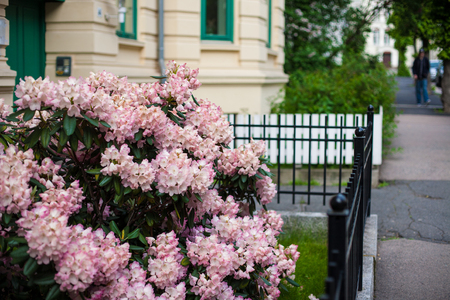 oslo: Flowers front a window. Floral facade