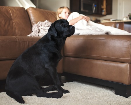 Dog with little girl watching television.
