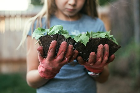 Little girl planting vegetables