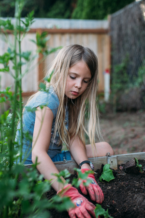Little girl planting vegetables  in raised garden bed