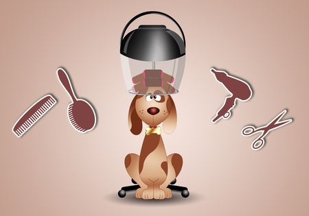 dog grooming: little dog to the hairdresser for grooming
