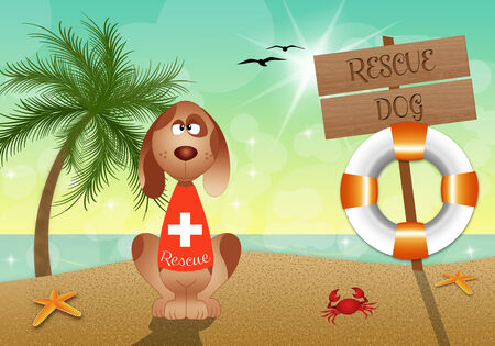 rescue dog: Rescue dog on the beach