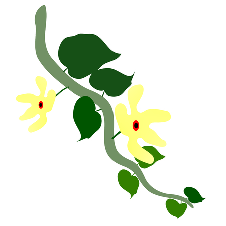 Bindweed with yellow flowers and Illustration Stock Photo