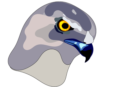 Hawk face sharp side view colours illustration icon logo Ilustracja