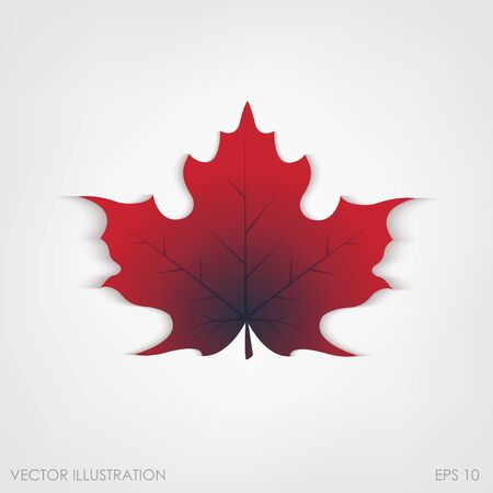 dry leaf: Maple leaf in a realistic style on a white background, isolated object. Vector illustration, botanical element of autumn dry leaf for your projects.