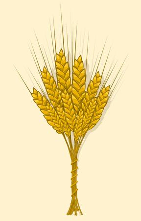 Korenaren, gerst of rogge worden tot een bundel geweven. Vektornaya Illustratie, pictogram, symbool Compact, granen oogsten een nieuw gewas af. Illustratie voor uw projecten.