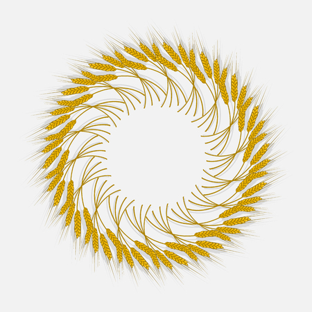 Spikes of wheat, barley or rye are woven into one bundle. Vector illustration icon, a symbol of the farm, crops gathered new crop. Illustration for your projects.