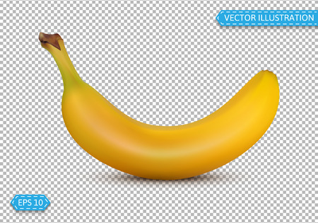 Banana in a realistic style isolated vector illustration on a tr