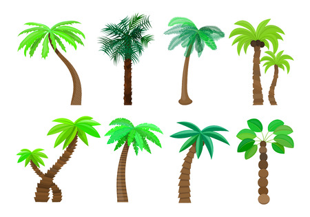 Palm tree isolated in cartoon style set on a white background Vector Illustration. Trees summer sun tropical beach, a natural topic for your projects. Illustration