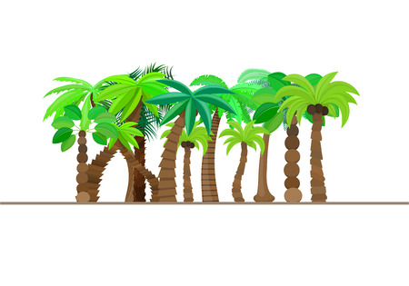 Palm tree, forest, jungle isolated in caricature style, set on a white background. Vector illustration. Illustration