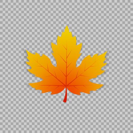 透明な背景、孤立したオブジェクトでリアルなスタイルでカエデの葉。植物の要素のベクトル図