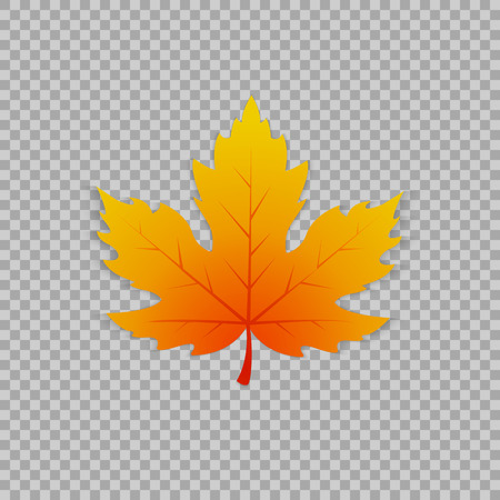 Maple leaf in a realistic style on transparent background, isolated object. Vector illustration, botanical element