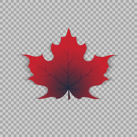 Maple leaf in a realistic style on transparent background, isolated object. Illusztráció