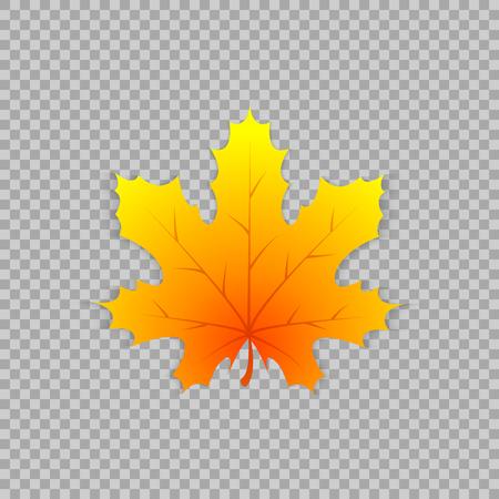 Feuille d'érable dans un style réaliste sur fond transparent, objet isolé. Banque d'images - 84949535