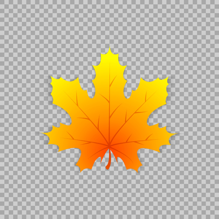 Maple leaf in a realistic style on transparent background, isolated object. Illustration
