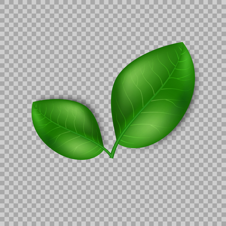 Leaves design elements. Green sprout green leaves symbol vector concept on transparent background. Ecological theme. Greenery. Vector Illustration.