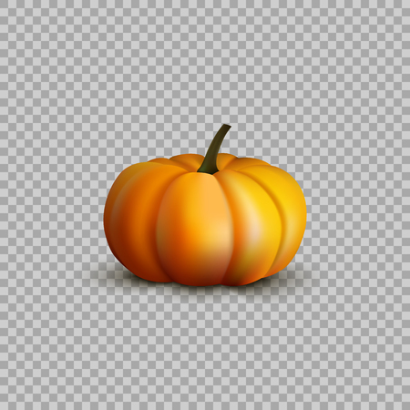 Pumpkin in a realistic style on transparent background, isolated object. Vector illustration, element for your Projects summary.