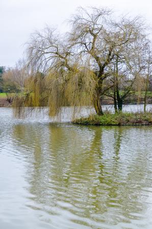 burgundy colour: The Pond in Bourbon-Lancy, France, Burgundy, colour, vertical