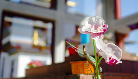 workship: an flower in a buddhist temple, color, vertical