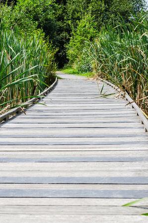 teck: An little bridge of wood in outdoor, color, vertical