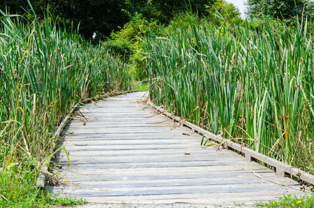 teck: An little bridge of wood in outdoor, color, horyzontal