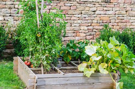kitchen garden: an straight farming in a kitchen garden, color,