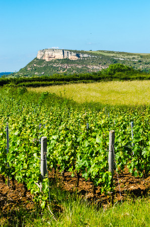 The Rock Of Vergisson and wine yard's, Burgundy, France, color Banque d'images