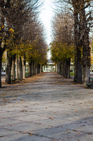 Vichy, France, Burgundy, public park in automn, vertical, color Banque d'images