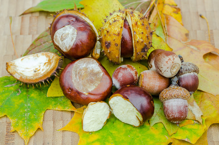 Chestnuts on leaf, autumn, color and composition Horisontales