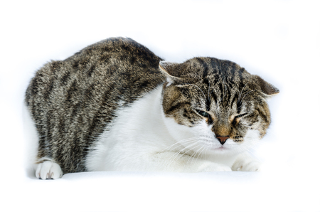 scared cat, isolated on white, color and horizontal