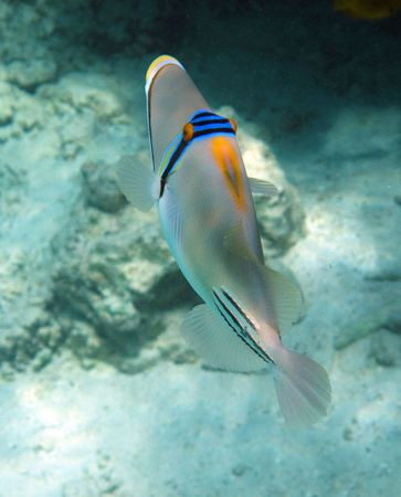 The underwater world                                  photo