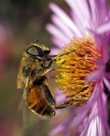 macrophoto: The world of insects                      Stock Photo