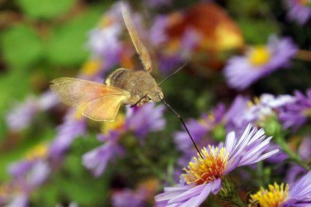 macrophoto: Flight of the butterfly