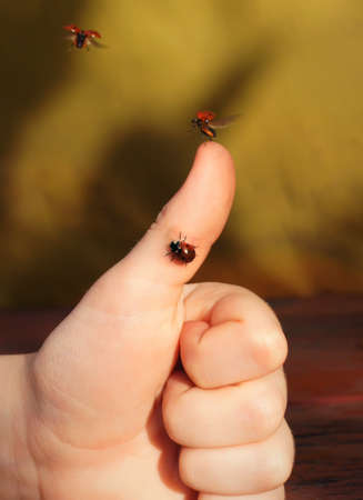 chronicle: The chronicle of a flying-up ladybug