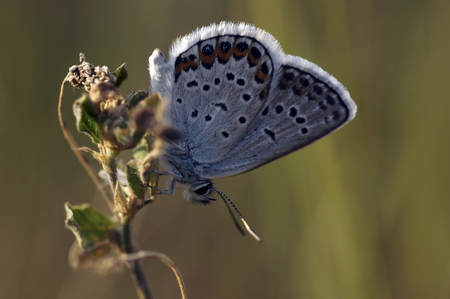 reproduction animal: Butterfly on flowers