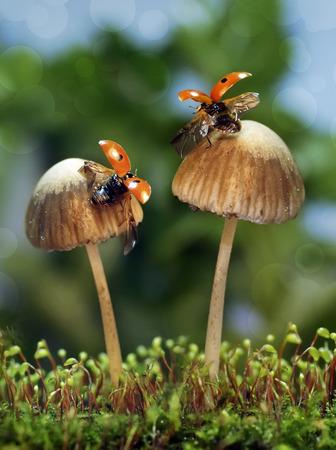 The ladybug sits on a mushroom