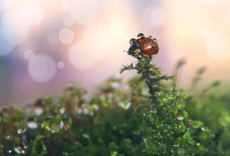 Ladybug in dewdrops on a beautiful background