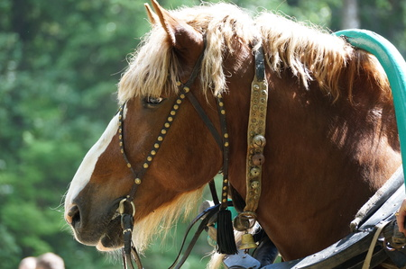 cartage: harnessed a horse,put on the clamp and ready to go