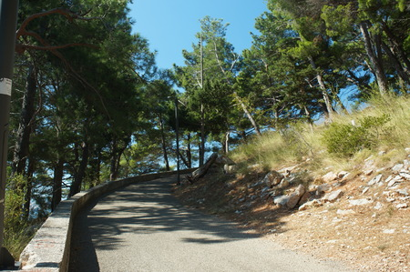 branched: health trail along the romantic road to the sea, branched old pine trees and the smell of the sea Stock Photo