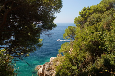 white boat floats in sea,view from the coastal mountains, pine trees and sea in Montenegro Stock Photo