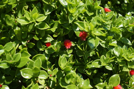 but: red is very small but not less beautiful flowers, flora and fauna Stock Photo