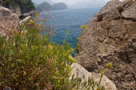 fauna: sparse vegetation rocks,small flowers, flora and fauna,macro