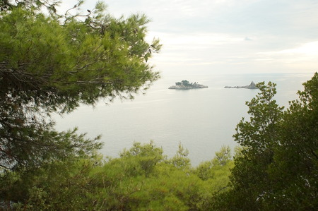 expanse: views of the expanse of the sea through the green needles of the pine trees, nature of Montenegro