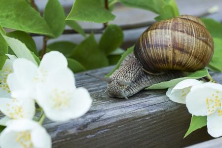 slug snail in the flowers in macro