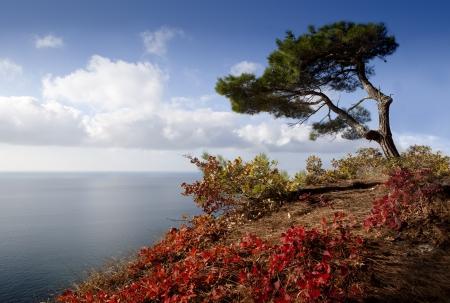 water s: Autumn tree on a coastline