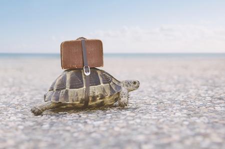 Schildkröte mit Koffer auf einem Rücken. Getöntes Bild, selektiver Fokus.
