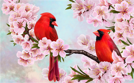 flowering: Two red birds on a branch of a flowering almond