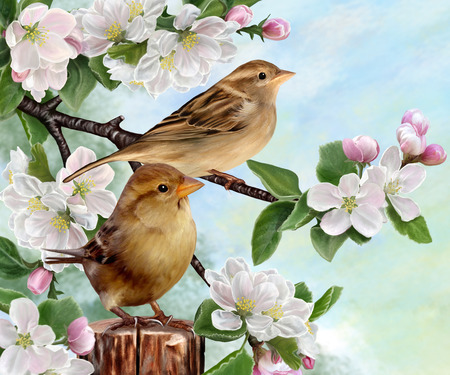 sparrows: Two sparrows on a branch of apple blossom Stock Photo