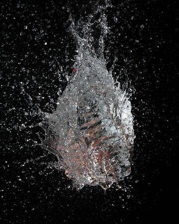 waterShell Stock Photo