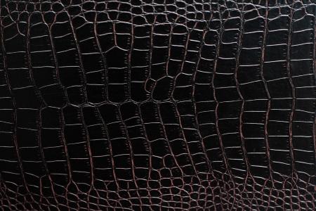 악어: 악어 가죽 스톡 사진